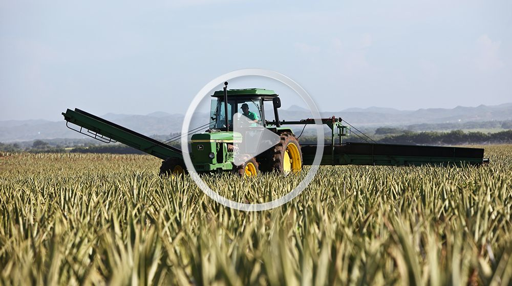 Подборка видео про сельское хозяйство в телематике